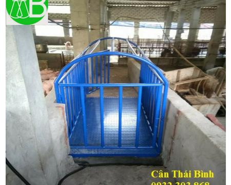 Lắp đặt cân động vật ở Quảng Ninh